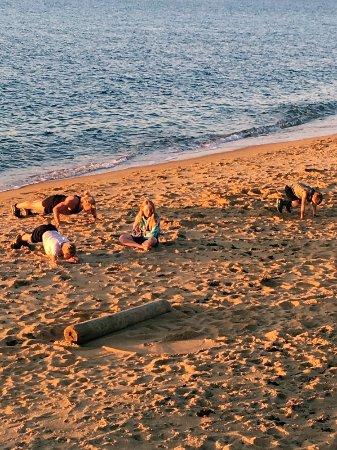 Leash Free Dog Beaches Mornington Peninsula