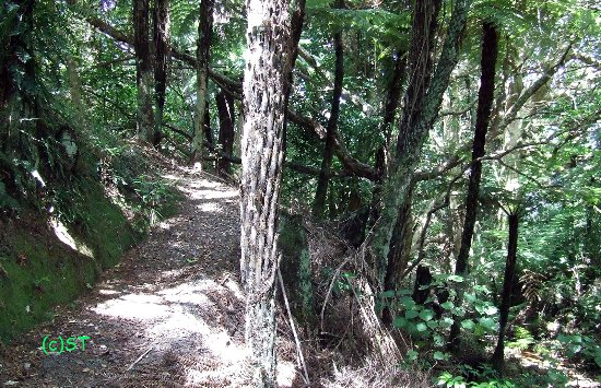Whakatiwai, New Zealand: Puriri Grove Track