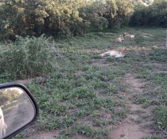 Mapungubwe National Park-billede