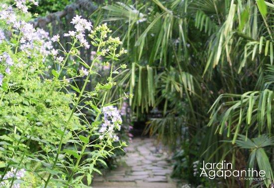 Le jardin agapanthe par alexandre thomas architecte for Alexandre jardin le zubial