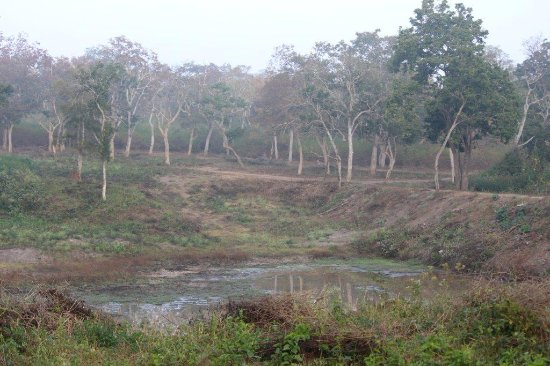 Bandipur National Park and Tiger Reserve: Water body inside forest