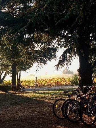 Rocca Grimalda, Itália: Giardino con biciclette per ospiti
