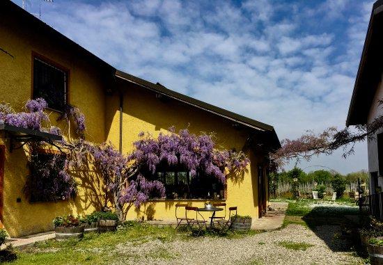 Rocca Grimalda, Itália: Cascina la Maddalena