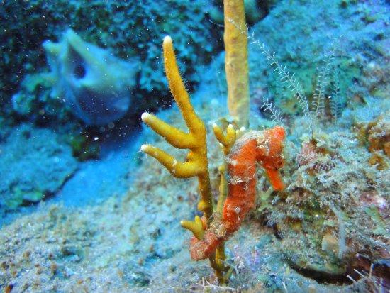 Windwardside, ซาบา: Scuba Diving Saba | November 2017