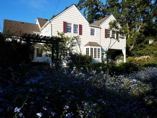 Salem, OR: Spring forget-me-nots in full bloom