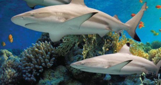 National Aquarium Baltimore All You Need To Know Before You Go - 10 awesome aquariums where you can spend the night with sharks