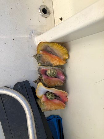 George Town, Grand Cayman: Conch and shells