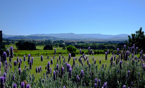 Mountain Ridge Wines - Winery, Restaurant, Art Gallery