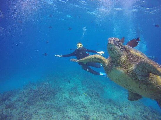 Oahu Diving: Sea turtle