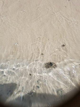 Ypao Beach Park: イパオ ビーチ