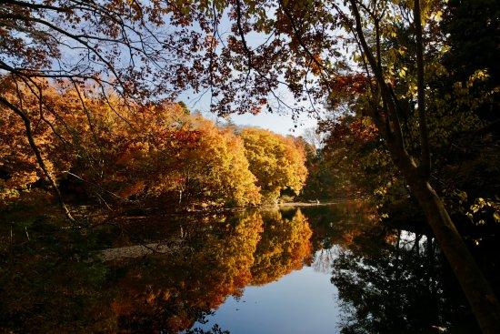 Lake Shinsei: 震生湖:紅葉