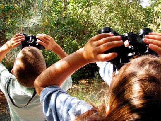 Bundanoon, Australia: Bridwatching & Spotlighting - just 2 of Morvern Valleys Activities