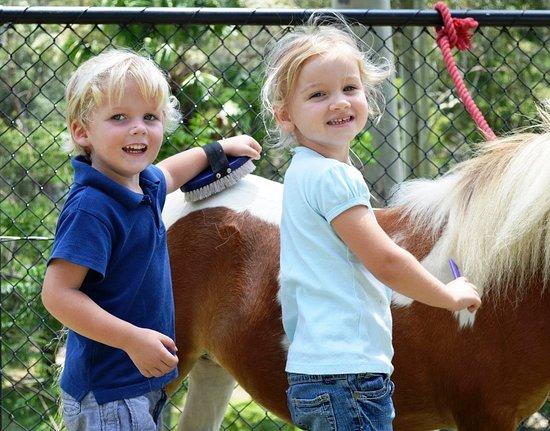 Bundanoon, Australia: Brush & Pat - Miniature Horses, Fudge loves all the attention.