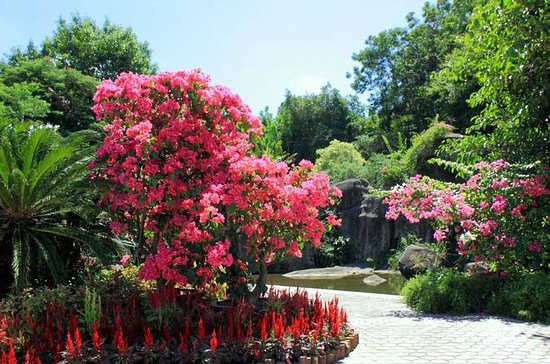 Xiamen Private Day Tour:  Botanical...