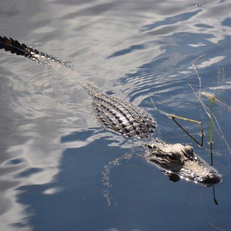 Airboat In Everglades : photo0.jpg