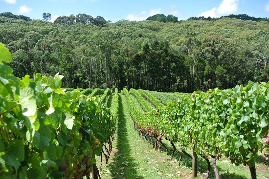 Rahona Valley Vineyard