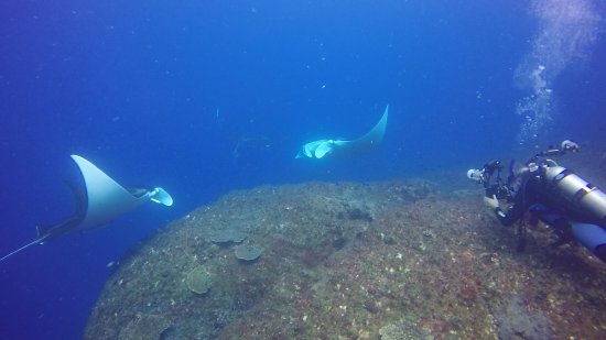 Wolf Rock Dive Centre: Manta Rays