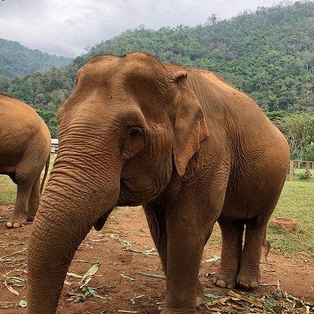 Elephant Nature Park Chiang Mai Location