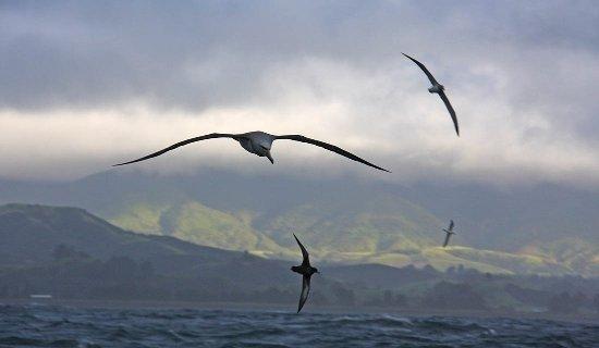 Albatross Encounter Photo