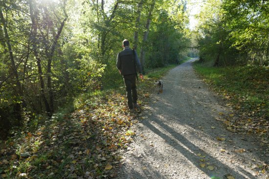 Castel San Gimignano, Italia: Tartufaio con cane - Truffle hunter with dog