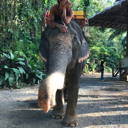 KokChang Safari Elephant Trekking: photo2.jpg