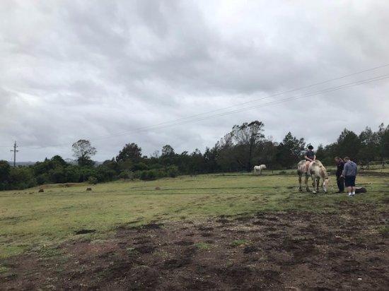 Outeniqua Moon Percheron Stud and Guest Farm: View