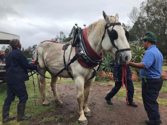 Outeniqua Moon Percheron Stud and Guest Farm: Carraige ride