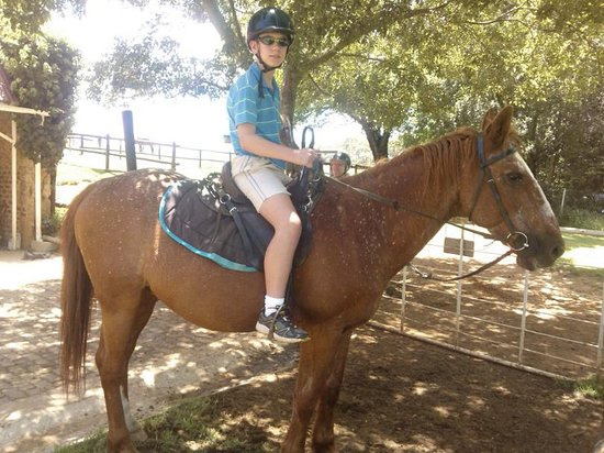Millstream Farm: The Highlight of my child's visit! He loves horses and he had so much fun with them.