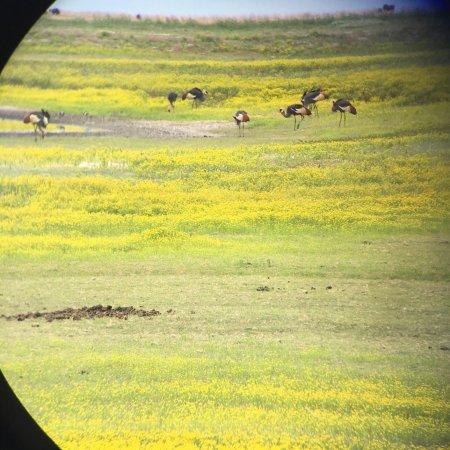 Liuwa Plains National Park: photo3.jpg