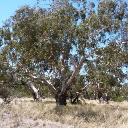 Inverleigh Flora Reserve