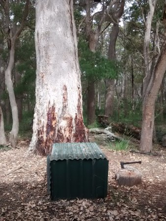 Karridale, Australia: The axe is for fuel collection - there are easier options than the huge tree.