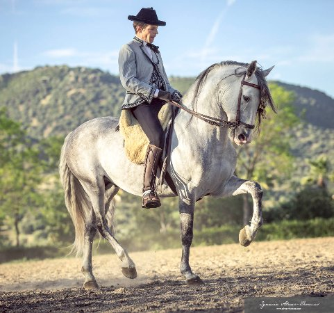 andalusian horse in sierra morena picture of south ole spain tours