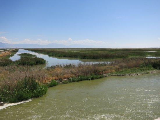 Brigham City, UT: Bear River Migratory Bird Refuge