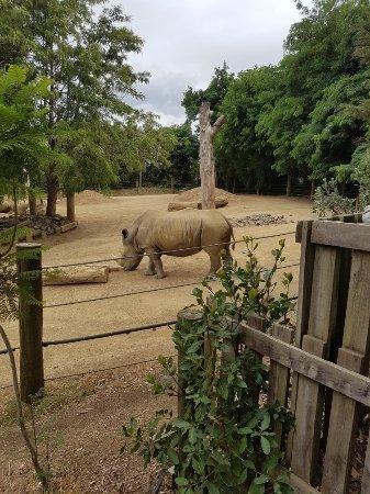 Hamilton Zoo: 20180101_121239_large.jpg