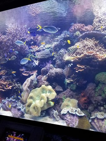 Downtown Aquarium: One of the fish tanks