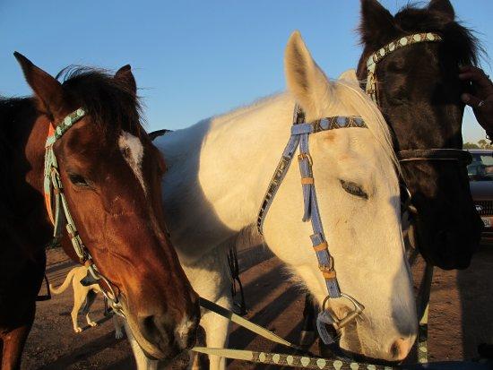 It's 4 You Tours : 3 chevaux très doux