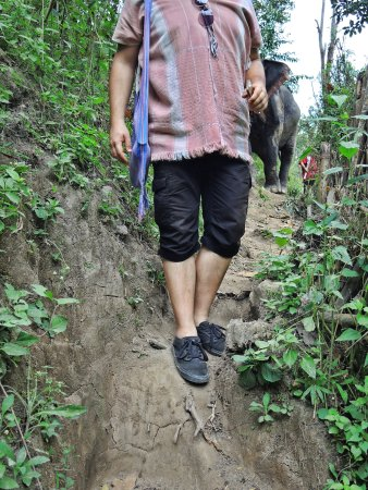 Elephants At Home: Narrow road to the waterfall