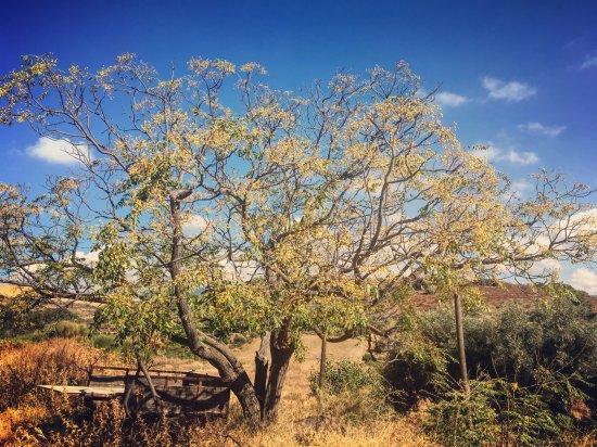 Pizarra, España: Net buiten de poort