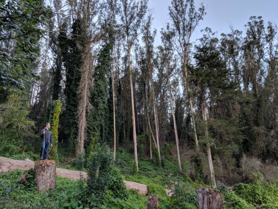 Mount Sutro Forest: Looking back into the forrest as you're coming out