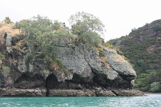 Whangaroa 이미지