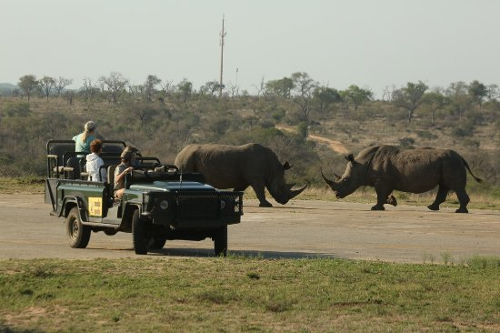Mala Mala Private Game Reserve, Sydafrika: Nothing like rhinos battling it out on the runway.