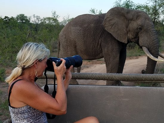 Mala Mala Private Game Reserve, Sydafrika: Although the animals are wild, they are comfortable with the presence of the safari vehicles