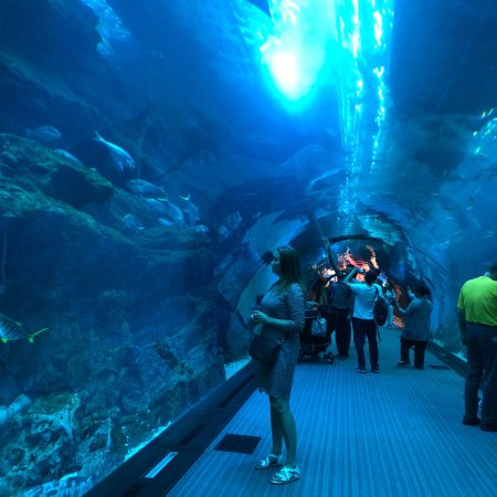 Dubai Aquarium Underwater Zoo All You Need To Know Before You - 6 amazing underwater attractions