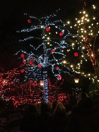 North Vancouver, Canada: Beautiful lights at Capilano Canyon Dec 2017.