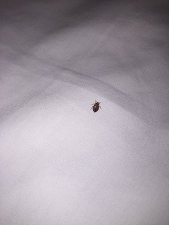 Bed Bug In My Sheets Picture Of Hyatt Place Dallas North Dallas