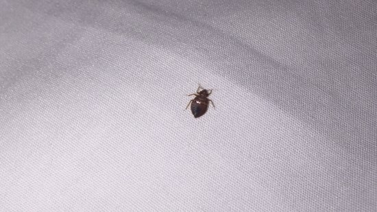 Lovely Hyatt Place Dallas North: Bed Bug In My Sheet