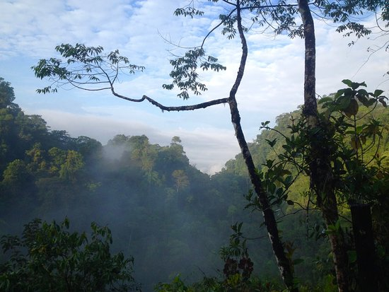 Piedras Blancas, Costa Rica: Beautiful view from a morning hike in the rainforest