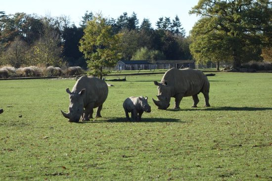 Cotswold Wildlife Park and Gardens: Little Alan!