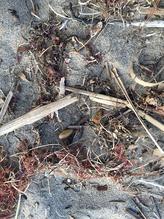Aptos, CA: Can you find the crab?
