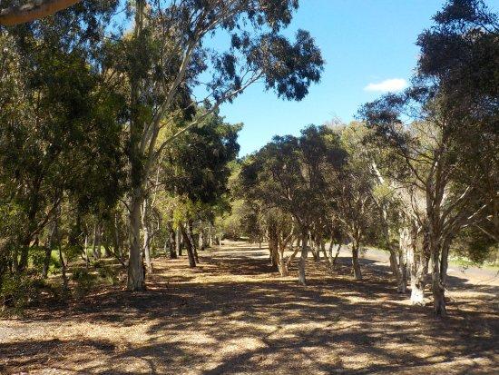 Brunswick, Australia: Well shaded
